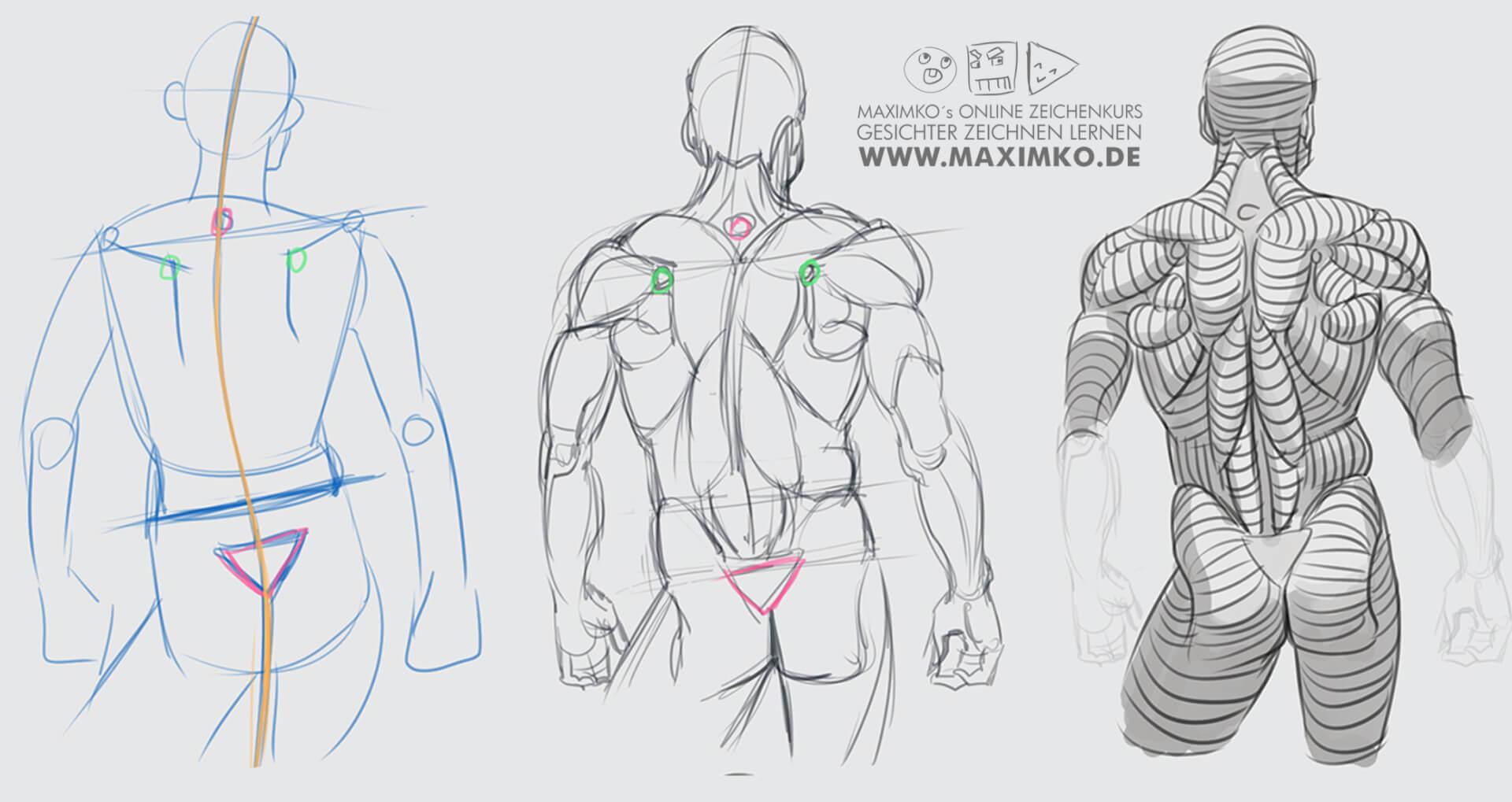 körper zeichnen lernen menschen muskulatur rücken online kurs schritt für schritt tutorial maximko