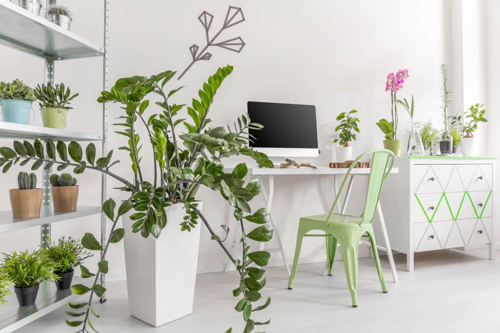 Home Office Zimmerpflanzen