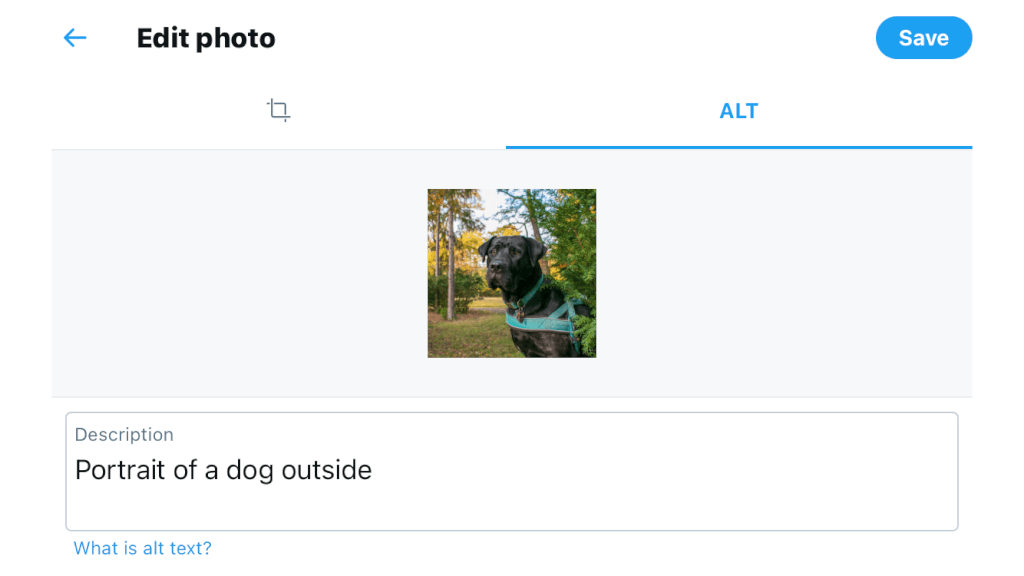 Twitter alt text feature with picture of a dog