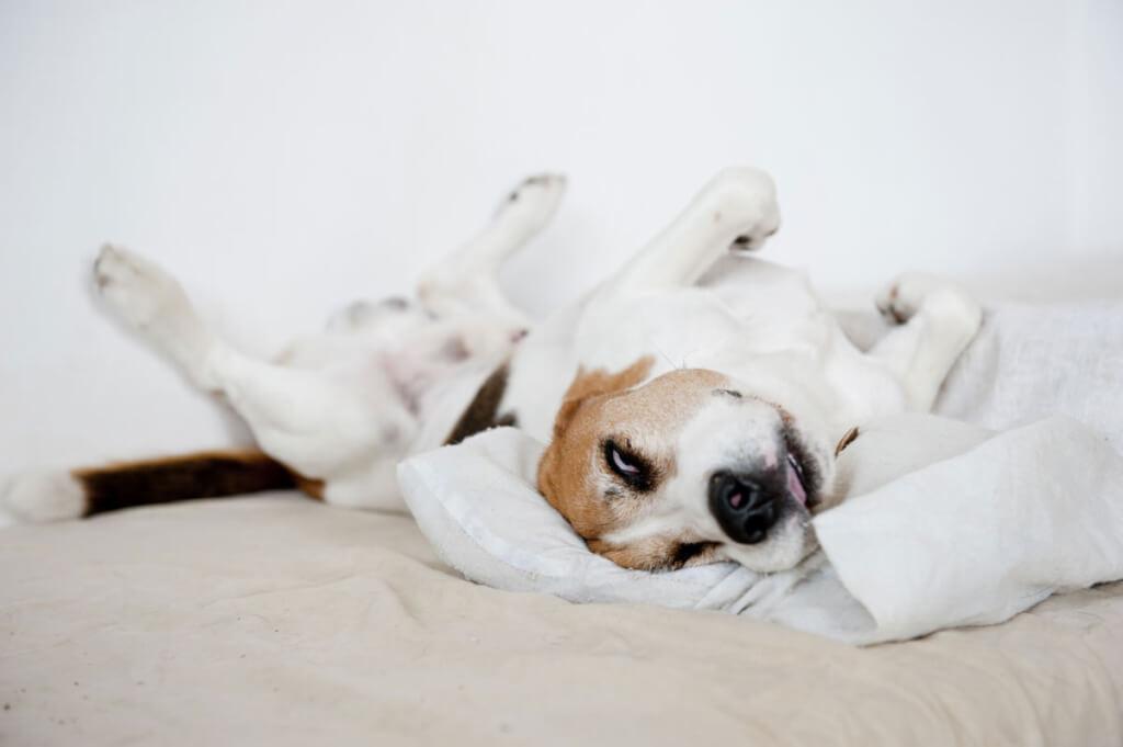 Erholsamer Schlaf als Erfolgsfaktor
