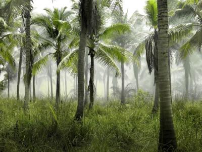 Jungle Scout Review - Lass dein Amazon Business wachsen