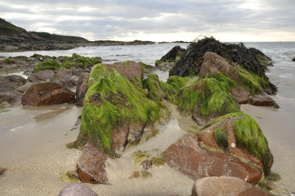 Wo sind überall Algen drin? Grünalgen am Strand