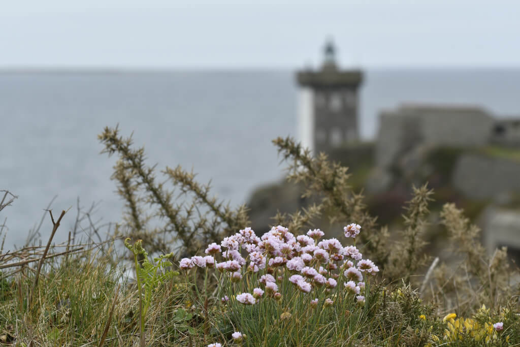 Bretagne für Anfänger 2018 04 Bretagne 0929