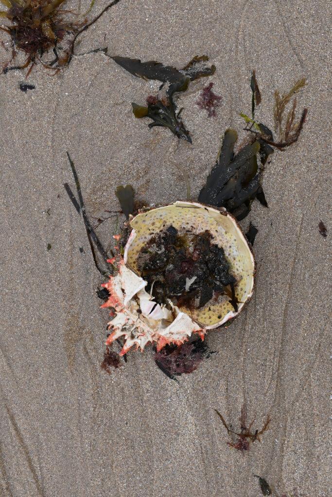 die zehn skurrilsten Strandfunde 2021 05 Erquy 1266