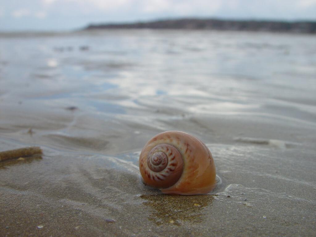 die zehn skurrilsten Strandfunde DSC03769