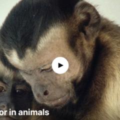 Monkeys are just like people too.