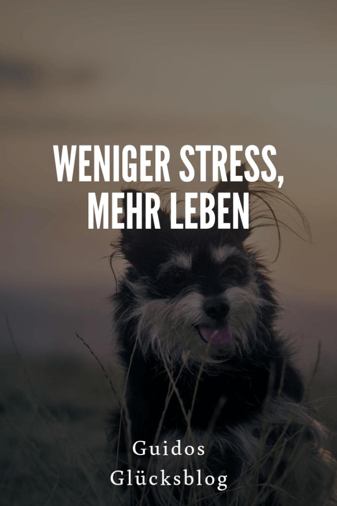 Weniger Stress, mehr Leben  Guidos Glücksblog