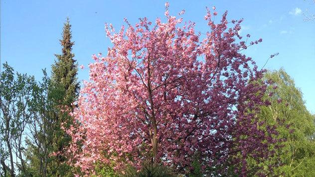 Mit dem Baumkataster zu einem Pollenbelastungsplan