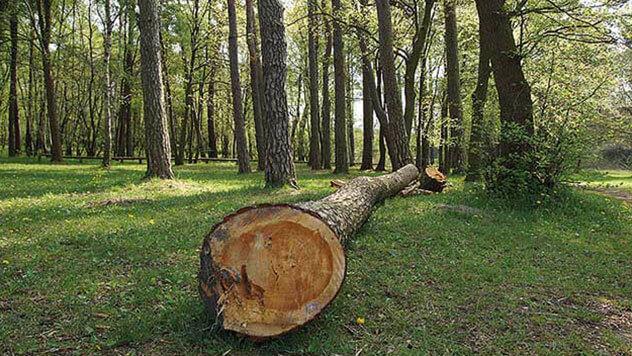 Auch im Winter aktuell: Baumkontrollen & Grünflächenverwaltung