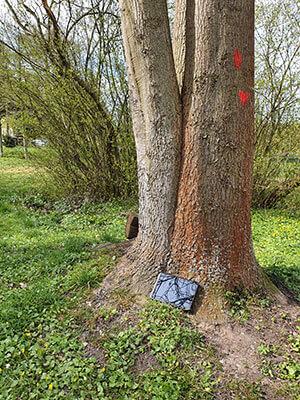 Taucha Baum2