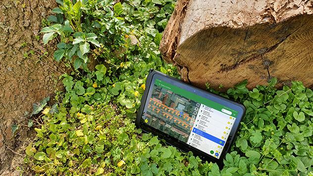 Teil 3: Mit Abstand bitte - Baumkontrollen durchführen
