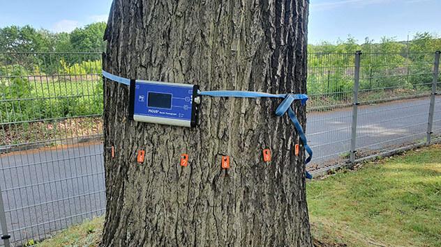 Baum bleibt dank Baumkontrolle per Schalluntersuchung erhalten