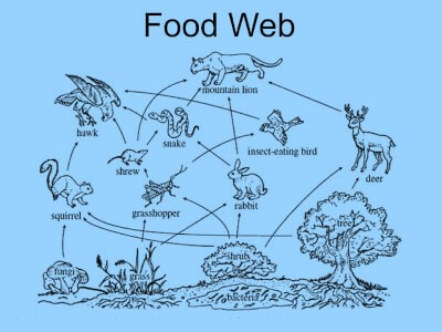 Picture Food web