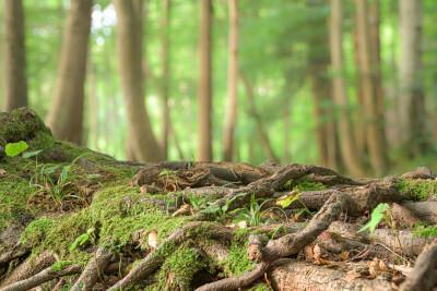 iStock 1176592528 Tree roots Bokeh