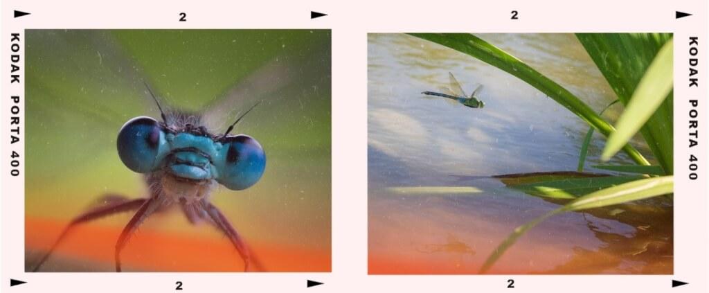 Dragonfly eyes flying cropped 1