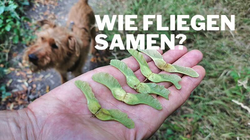 Wie fliegen Baumsamen?