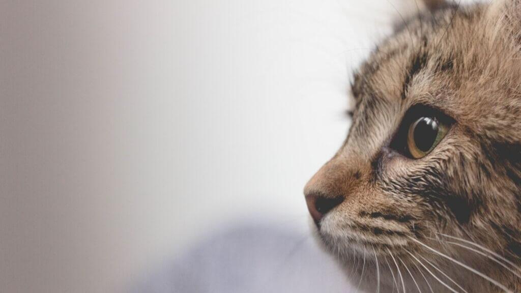 9 Fakten über Katzen, die du vielleicht noch nicht kennst!