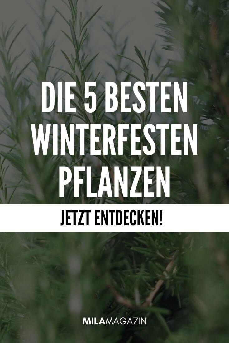 Die 5 besten Winterfesten Pflanzen | MILAMAGAZIN