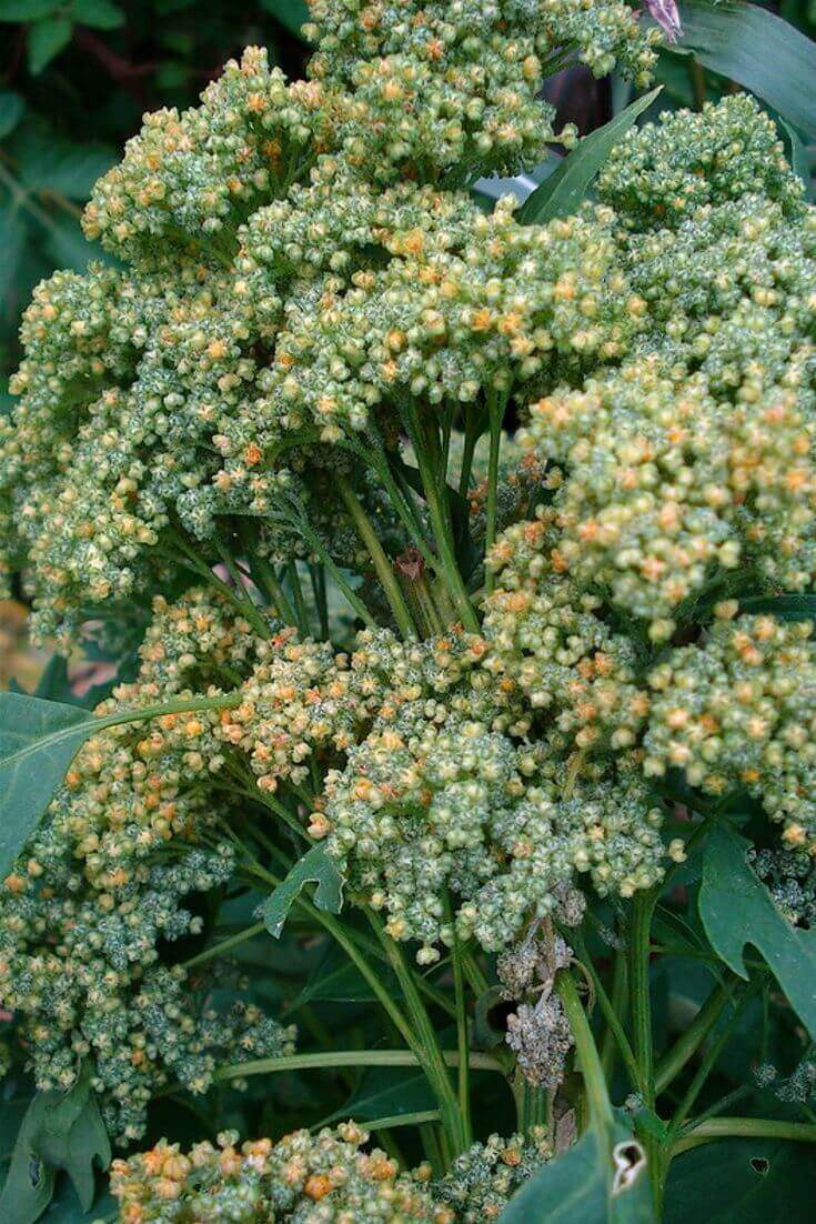 Superfood: Quinoa | MILAMAGAZIN