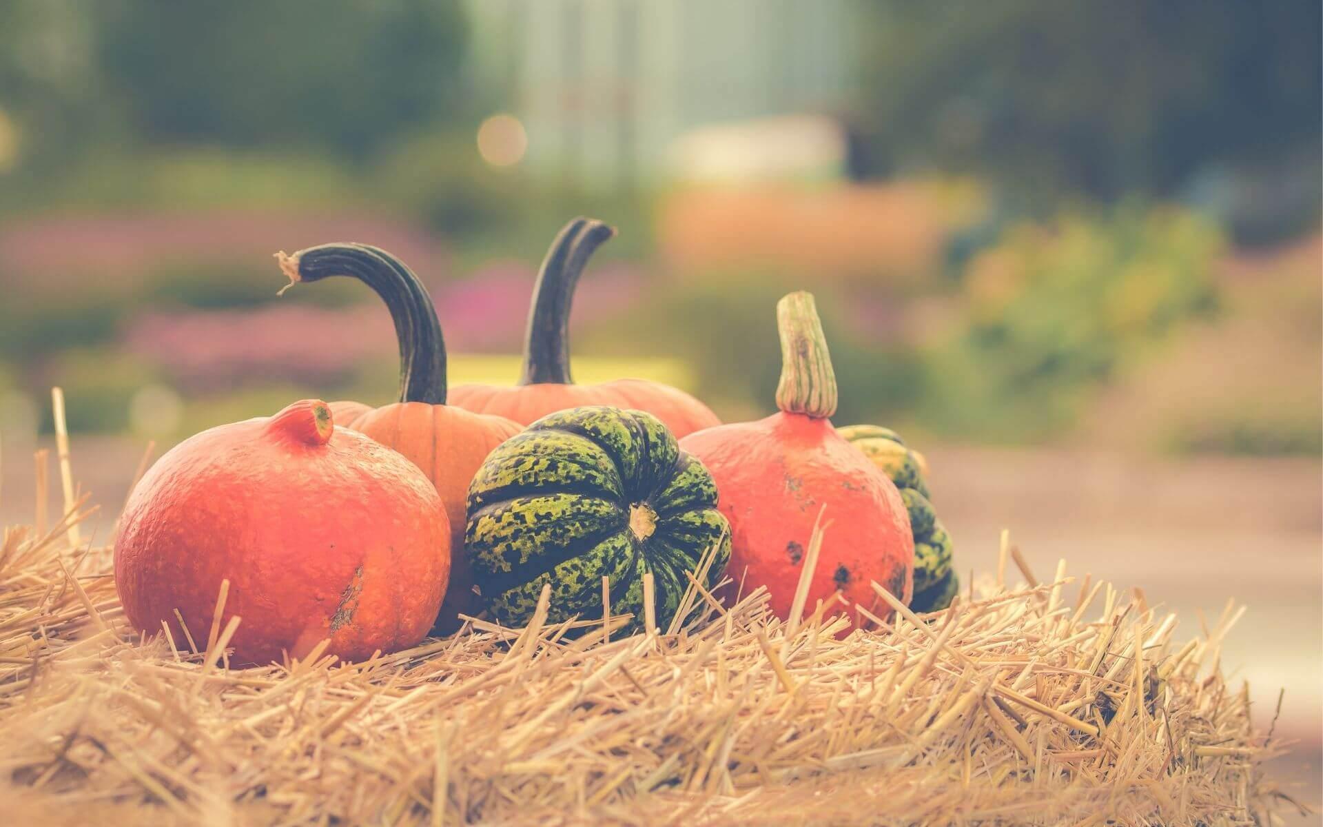 5 leckere Kürbisrezepte, die du im Herbst ausprobieren musst!