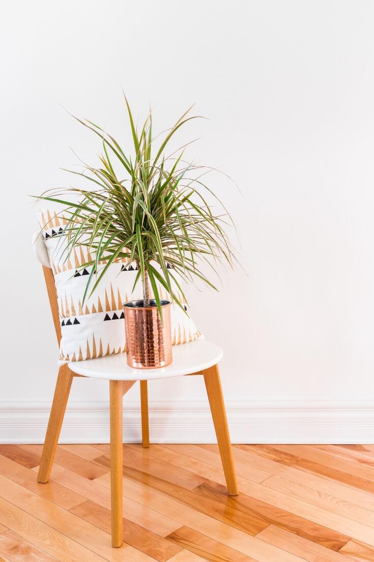 Drachenbaum | 5 Pflanzen, die dein Zimmer zur Oase machen | MILAMAGAZIN