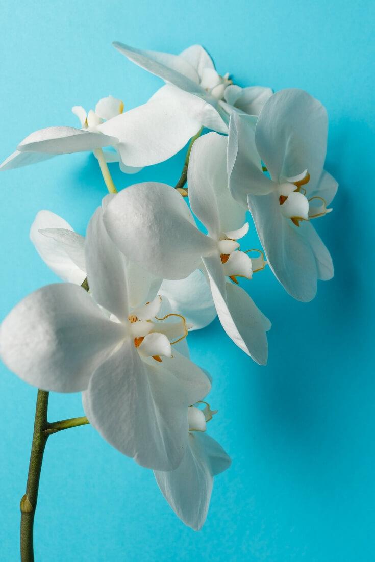Orchidee | 5 Pflanzen, die dein Zimmer zur Oase machen | MILAMAGAZIN