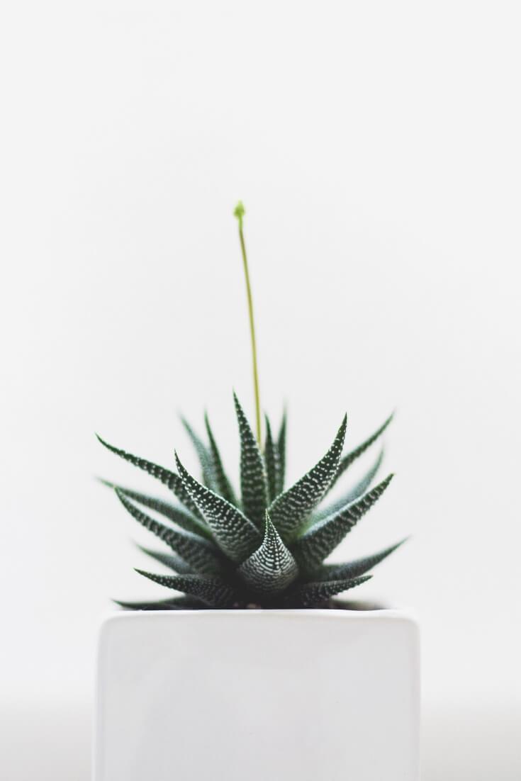Aloe Vera | 5 Pflanzen, die dein Zimmer zur Oase machen | MILAMAGAZIN
