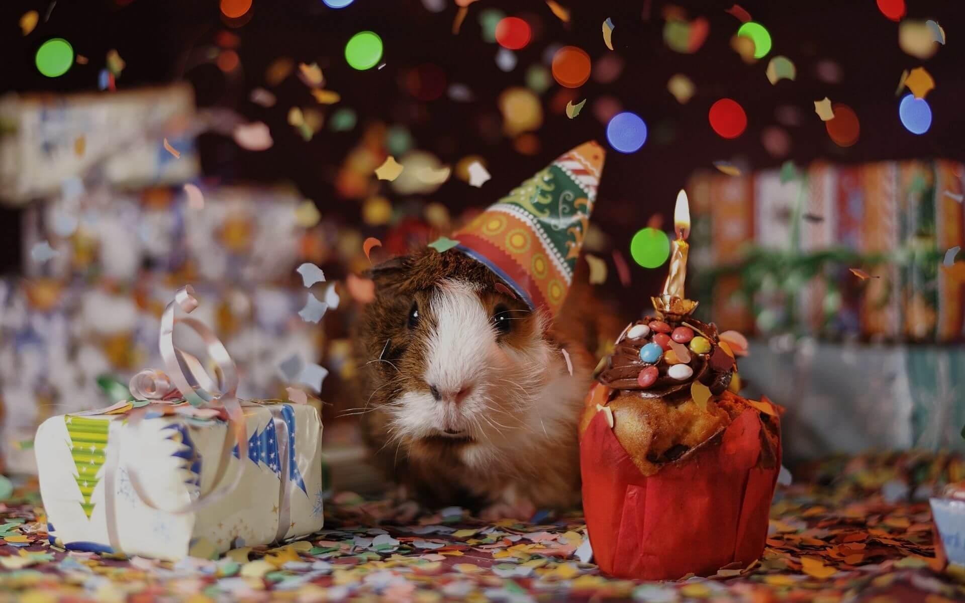 31 wunderbare Geburtstagssprüche und Glückwünsche