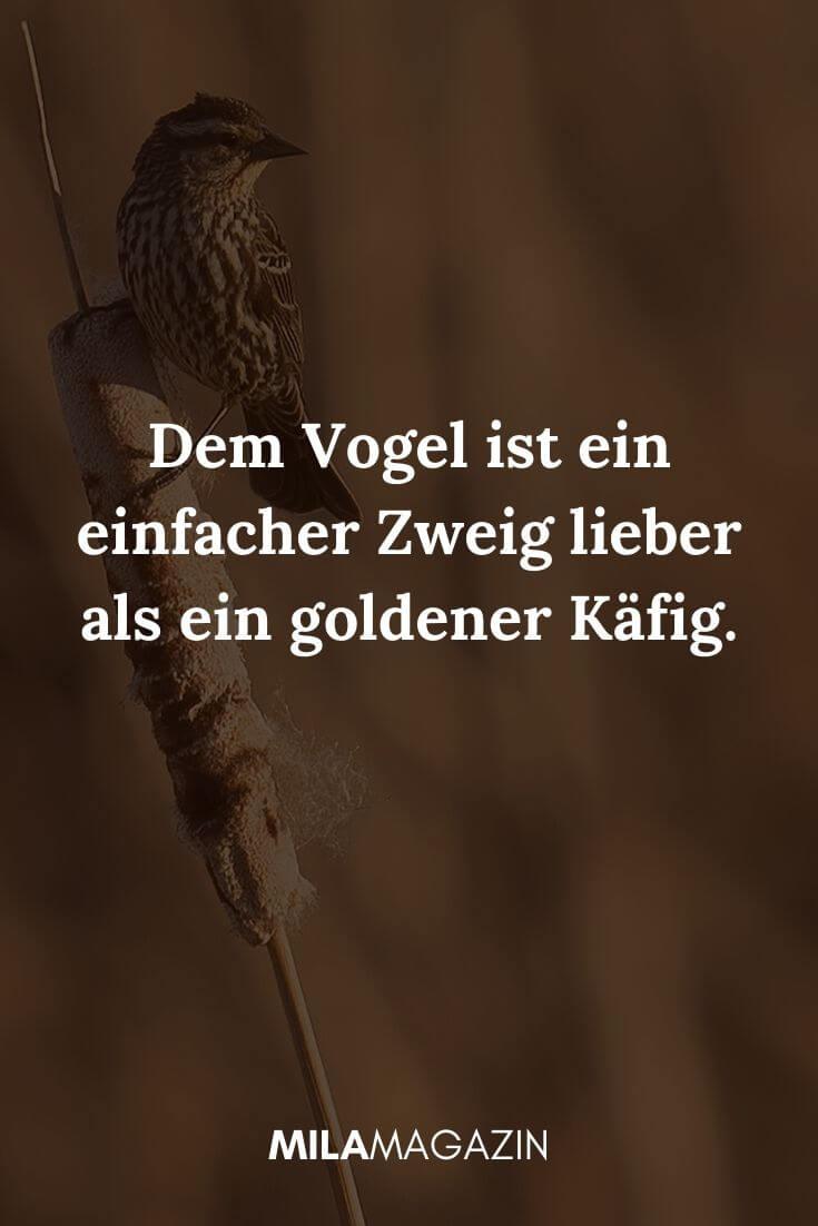Dem Vogel ist ein einfacher Zweig lieber als ein goldener Käfig. | MILAMAGAZIN