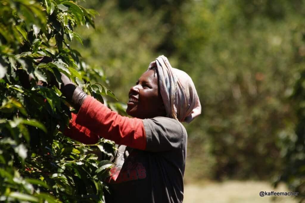 Pflückering in Kenia