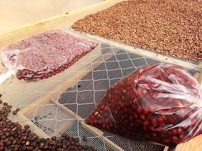 Fermentations-Experimente der Kaffeemacher in Nicaragua