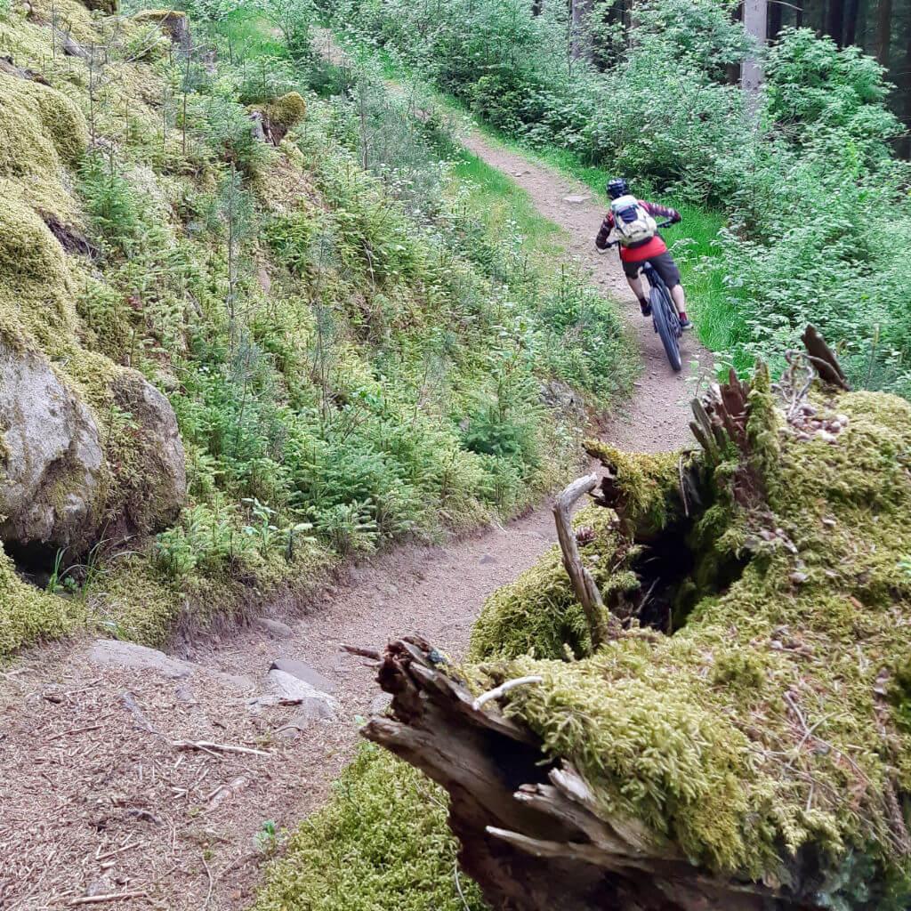 BeIm Beginner Bike Camp Schwarzwald lernst du die MTB Fahrtechnik Grundlagen