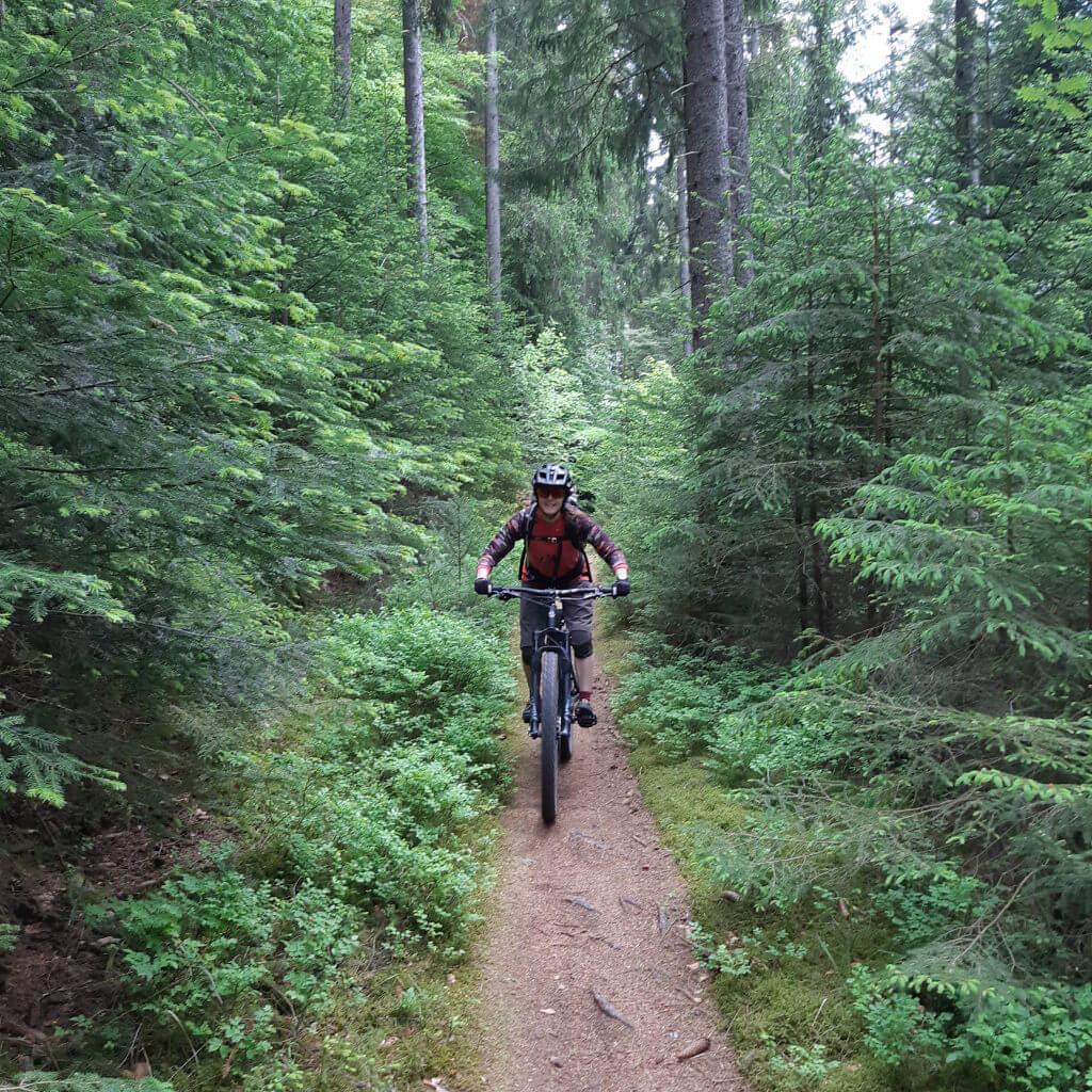 Leichte Singletrails stehen beim Einsteiger Bike Camp Schwarzwald auf dem Programm