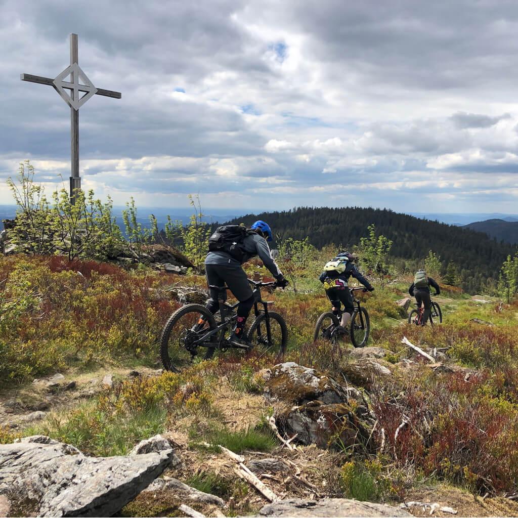 Geführte Mountainbike Touren am Arber im Bayerischen Wald durch Blaubeerfelder