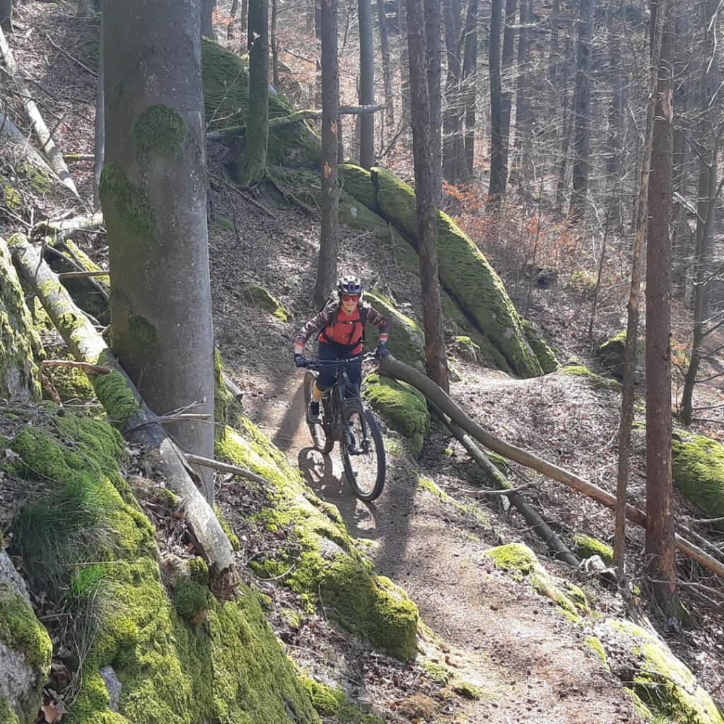 Natürlicher Singletrail bei den Mountainbike Reisen im Bayerischen Wald