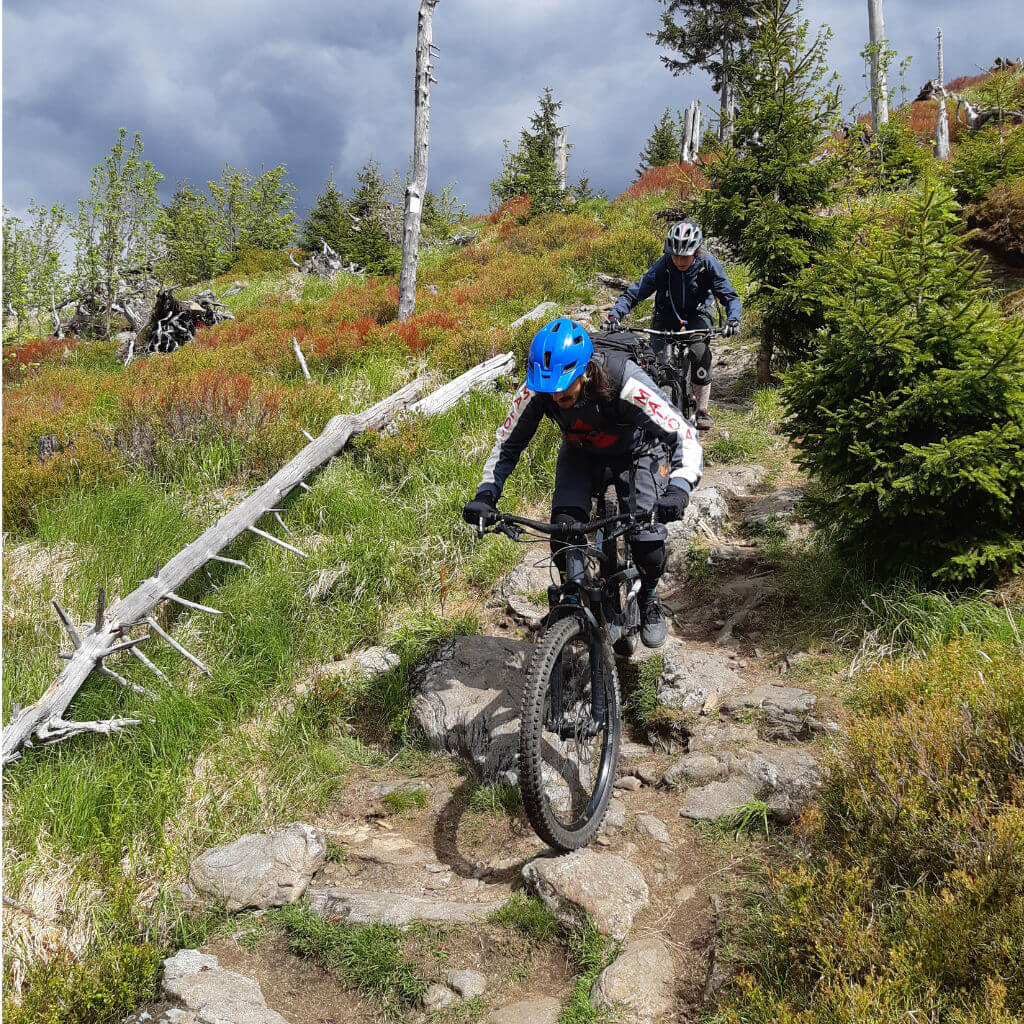 Blaubeerfelder finden wir beim MTB Trailcamp Bayerischer Wald rund um den Arber