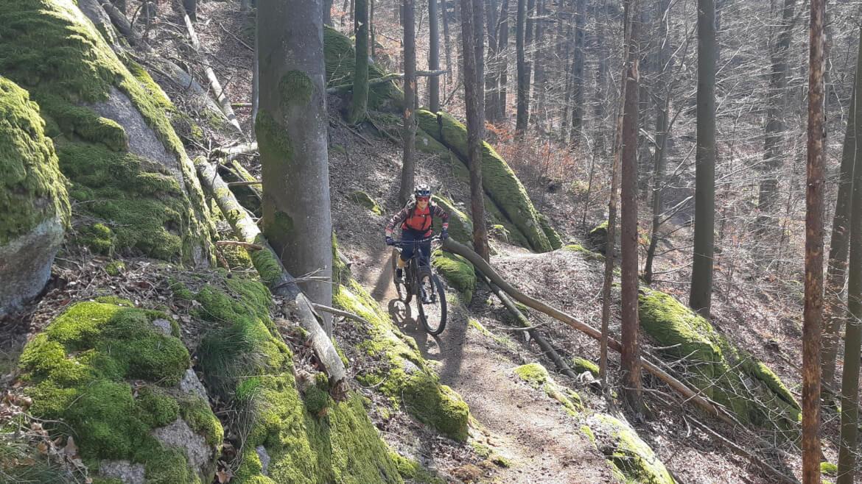 Singletrail beim MTB Kurztrip Bayerischer Wald