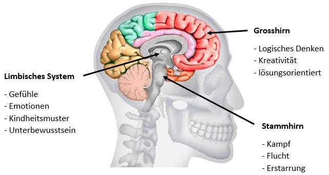 Hirnregionen