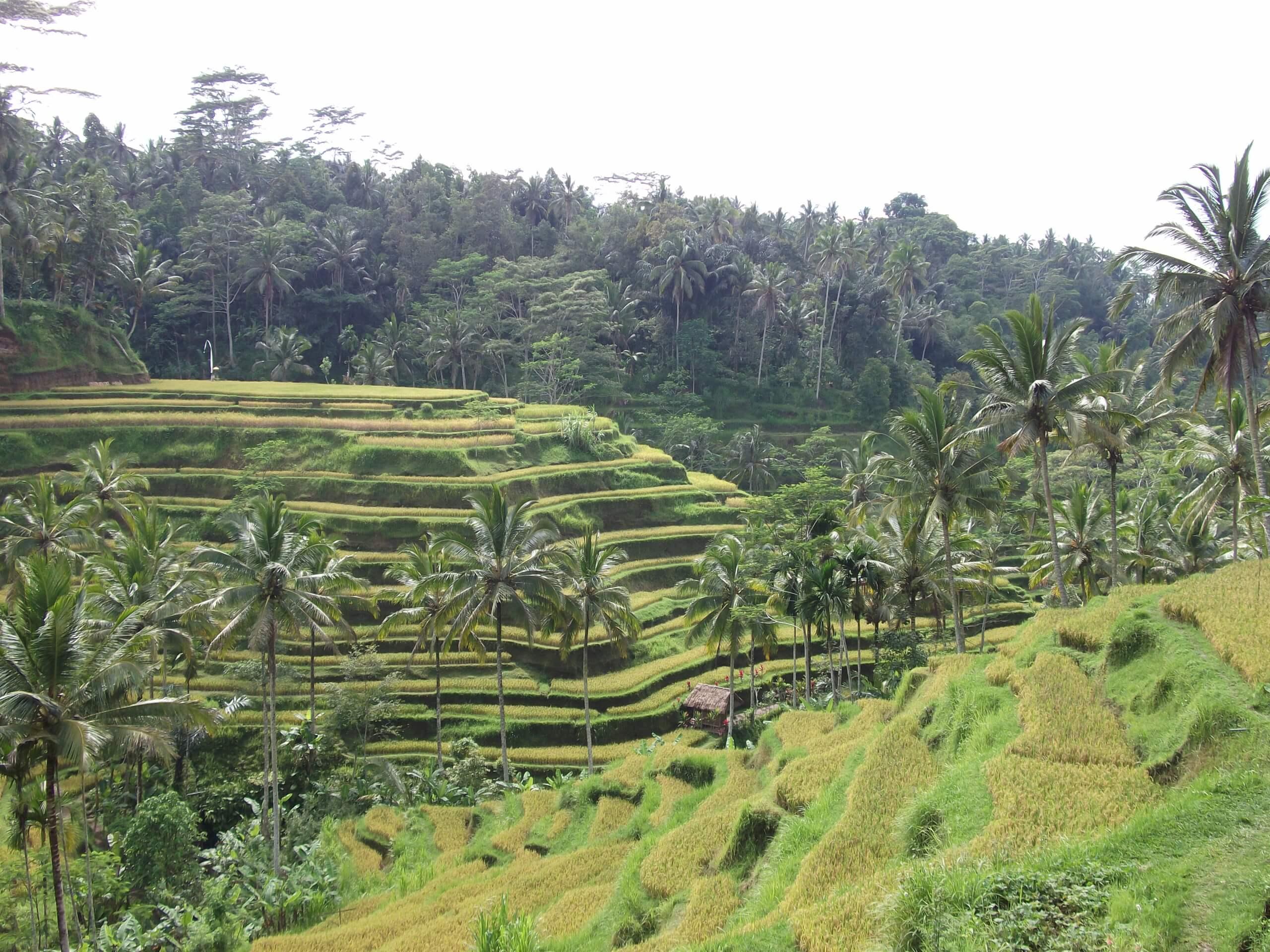 Bali oder über Pläne im Leben, die anders kommen