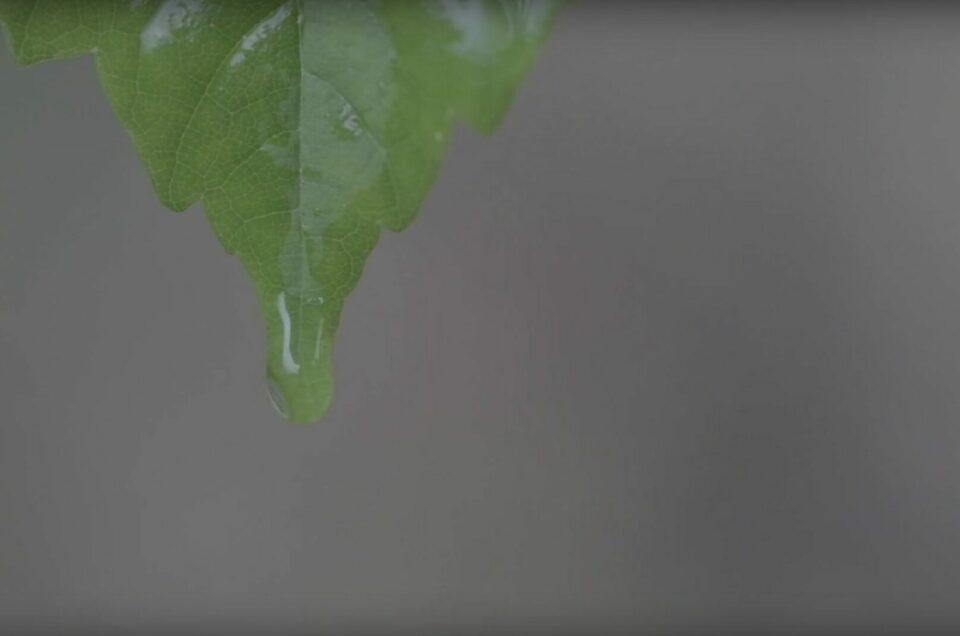 Der Frühingsregen tropft von den Blättern. Eine gute Möglichkeit, die Highspeedaufnahmen der Fuji X-T3 zu testen.