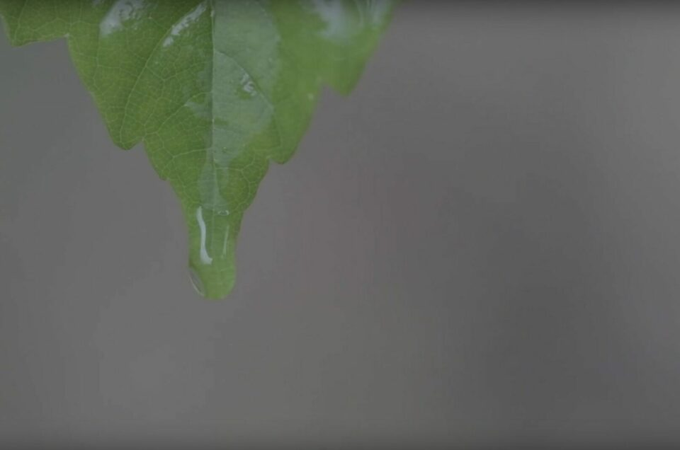 Highspeedaufnahmen im Frühlingsregen