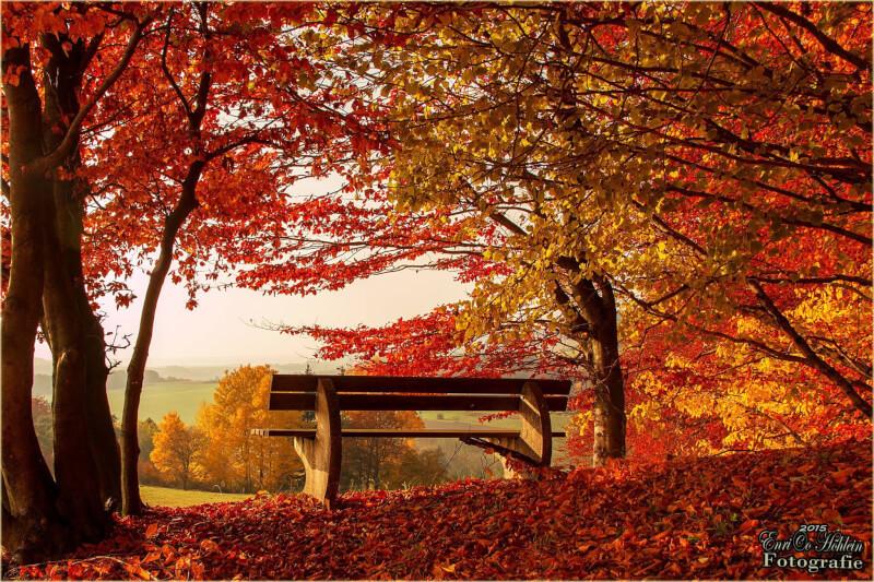 Einen Bank im Herbstwald mit weitem Blick in die Landschaft